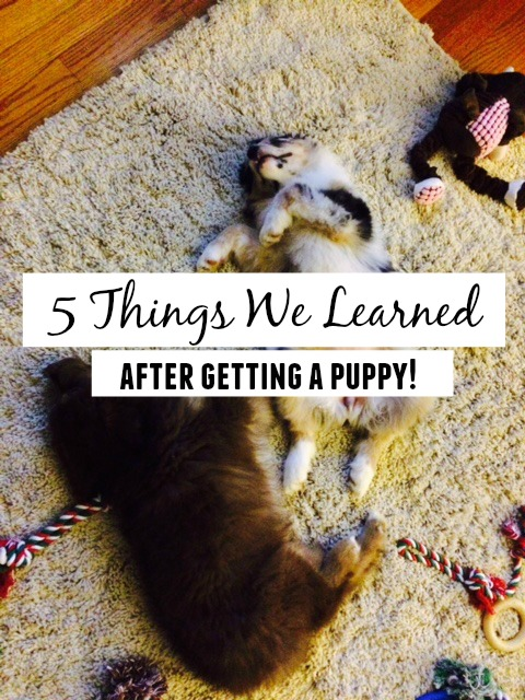 5 Things we learned after getting a puppy